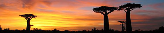 Madagaskar, Avenue des Baobabs